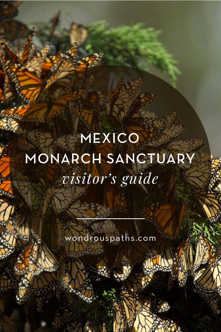 Mexico Monarch Migration Sanctuary visitor's guide | Wondrous Paths