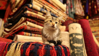 Kitten sitting on Turkish Traditional Carpets in Goreme, Nevsehir, Turkey